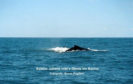 Foto 8 Baleias Jubarte mãe e filhote em Búzios.