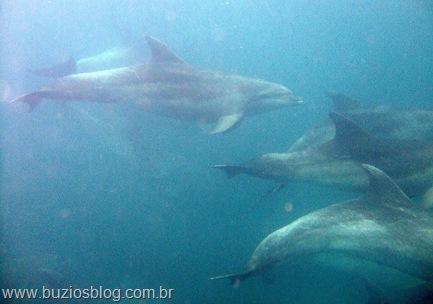 Golfinhos em Búzios