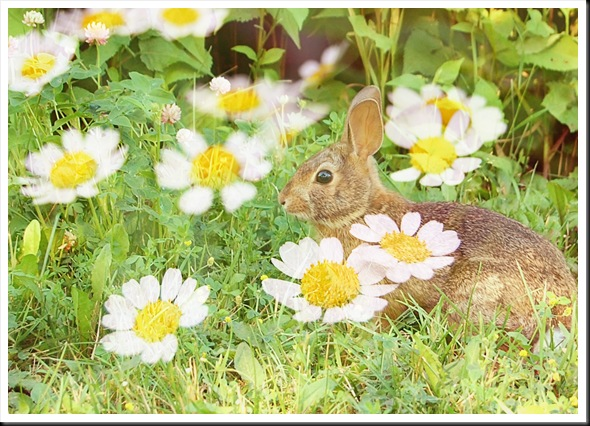 RABBIT AND DAISY 5x7