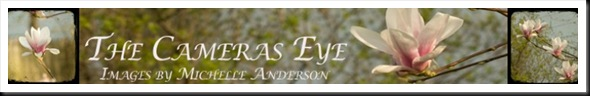 THE CAMERA'S EYE BANNER