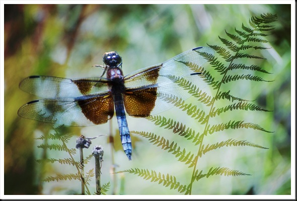 DRAGONFLY FERN 57 soft