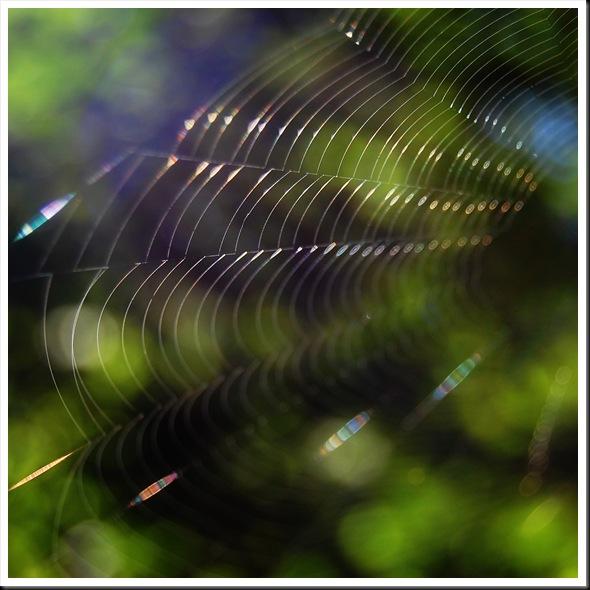 Web Square 1