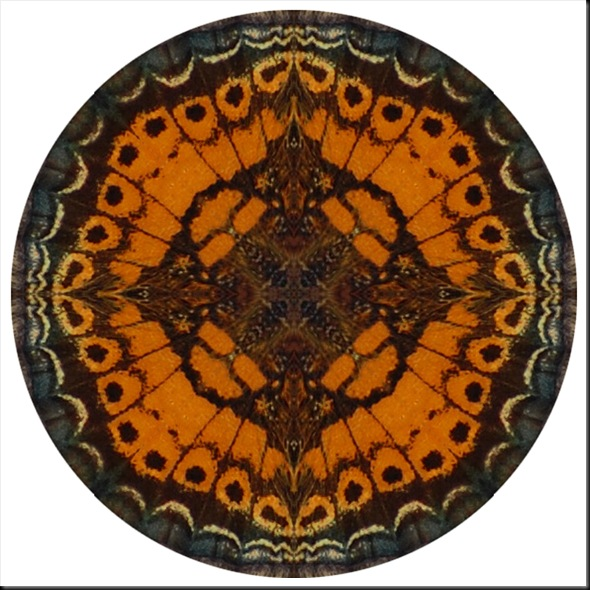 CRESCENT WING MANDALA