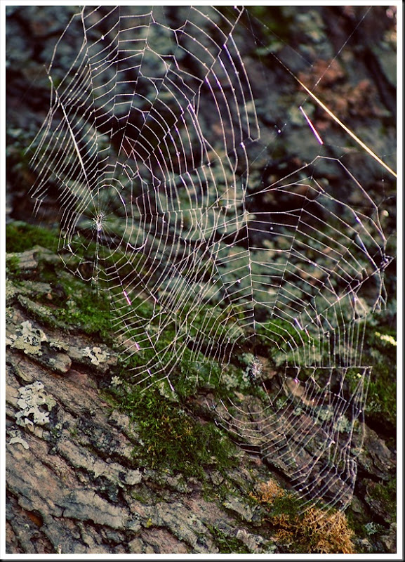Double spiderweb
