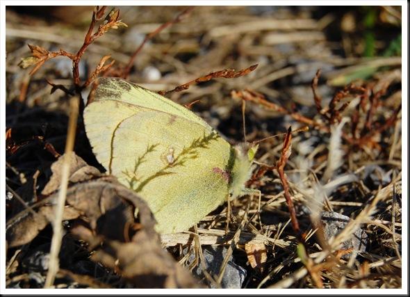 November Butterfly 2