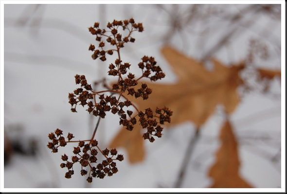 oak leaf bokeh