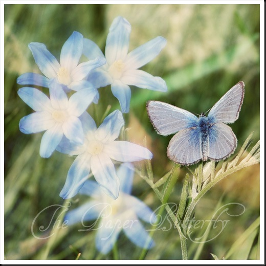 Blue Butterfly Blue Flowers sq WM
