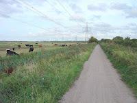 NCN1 over Eastcourt Marsh