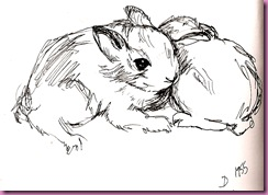 bunny drawing 1