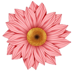 bcs_pink_daisy_png