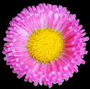 flower008