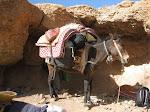 http://lh5.ggpht.com/_Q-b3D5rJSGo/TNbs3l8IylI/AAAAAAAAEcA/CSIdfS2rVc0/MarocBest%20%28143%29.JPG