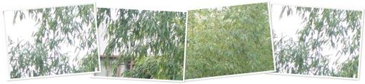View Bamboos