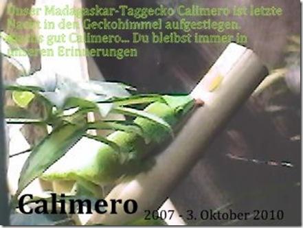 Calimero-Honig