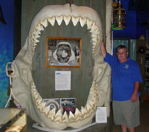 01RodFox1 - Great White Shark