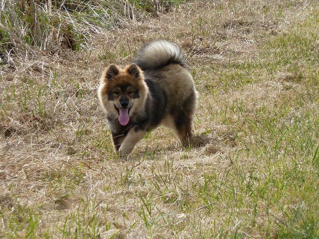 le plus beau chien du monde!!!! P1050250