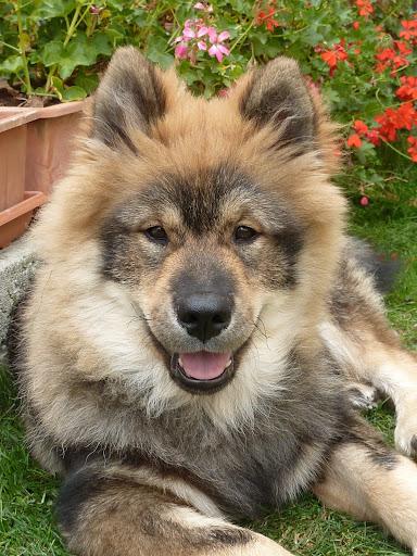 le plus beau chien du monde!!!! P1050577