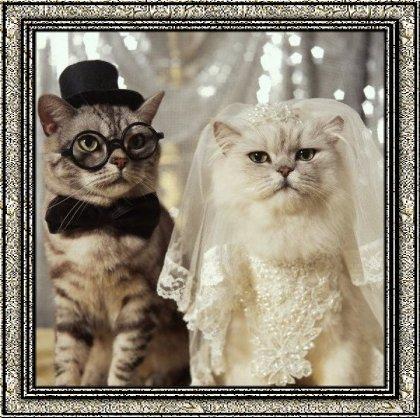 Gif casamento