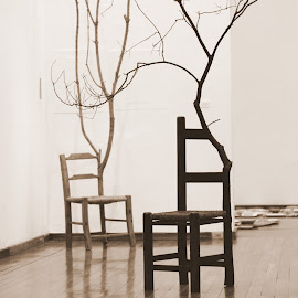 They were alive by Kinshuk Acharya - Artistic Objects Furniture ( life, environment, tree, chairs, green, art, furniture, dead tree )