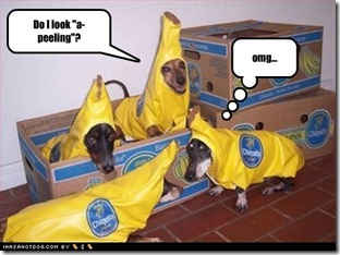 funny-dog-pictures-a-peeling
