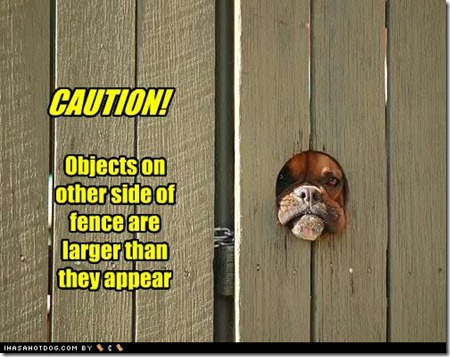 funny-dog-pictures-objects-larger