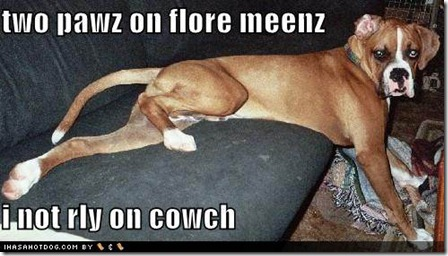 funny-dog-pictures-this-dog-is-not-really-on-the-couch