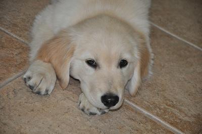 New Puppy 024