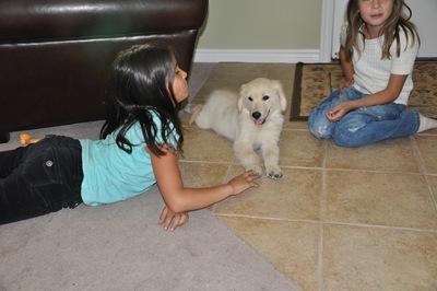 New Puppy 030