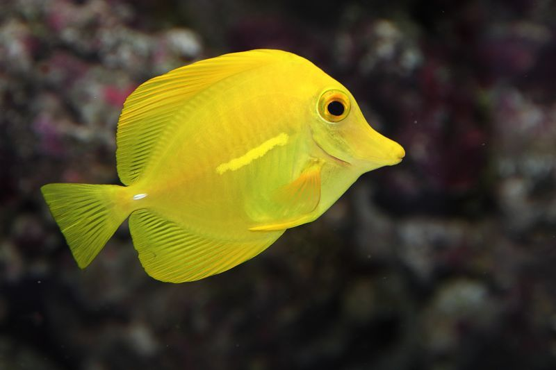 閒閒無事也拍魚-海水魚