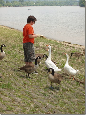 izzy and the geese two