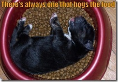 funny-dog-picture-food-hog