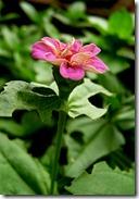 022 Garden