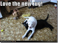 27100d1259817466-few-funnies-funny-dog-pictures-new-black-cat-rug