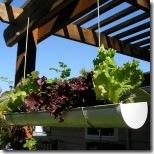 Vertical Garden beyond a Trellis GutterGarden-oct41-150x150_thumb