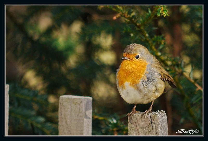 Mes photos au fil du temps Oiseaux002