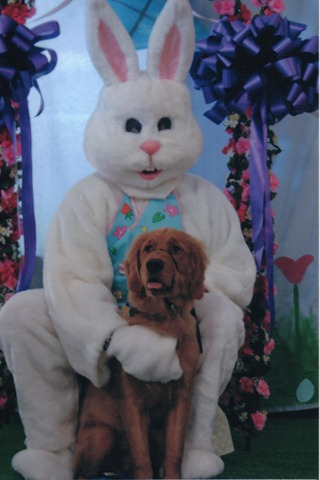 Easter Bunny photo