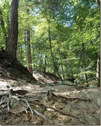 racines-sol (819x1024)