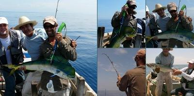 Ver pesca de dorada