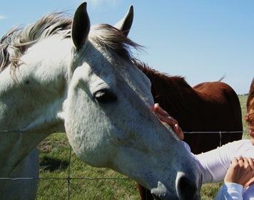 horses 032 copy