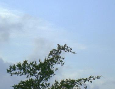birds nest (7)