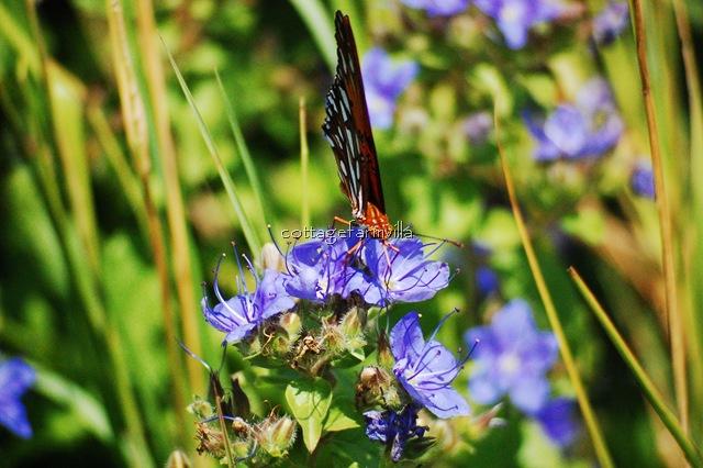 Butterfly (16)
