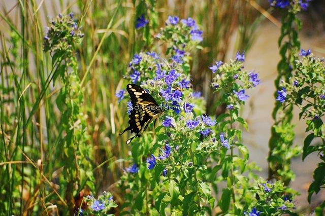 Butterfly (24)