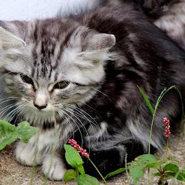 Fluff! by Rhonda Mullen - Animals - Cats Kittens
