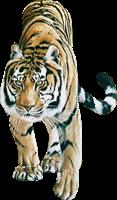 tigres misimagenesdivertidas.blogspot (6)