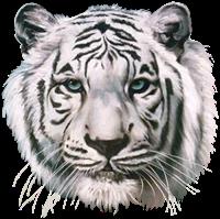 tigres misimagenesdivertidas.blogspot (9)