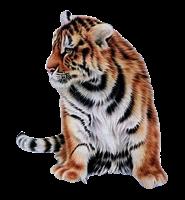 tigres misimagenesdivertidas.blogspot (8)