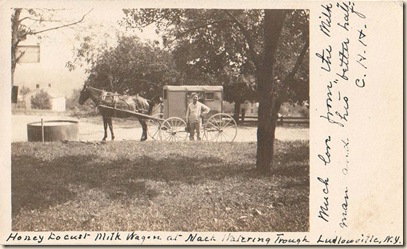 auto milk delivery wagon with horse (2)