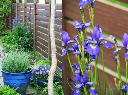 blå til blogg