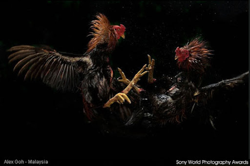 fotografia, photos, imagens, natureza, sony world photography awards