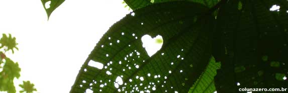 coluna zero, meio ambiente, salto morato, paraná, fundação o boticário